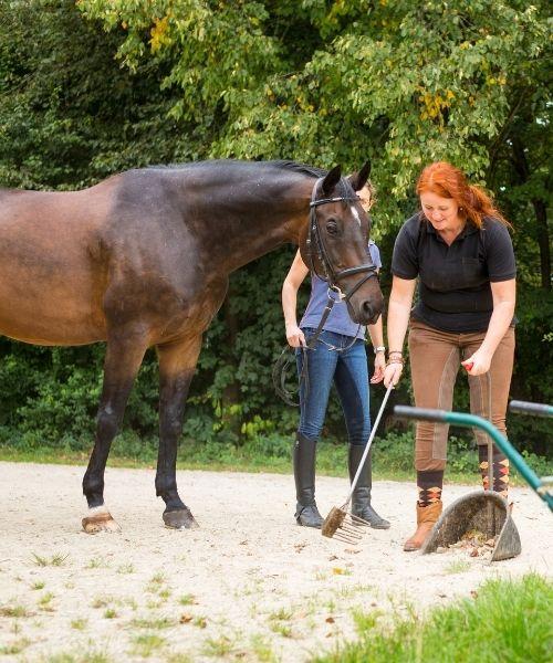 Αγροτουρισμός, φάρμα, άλογο